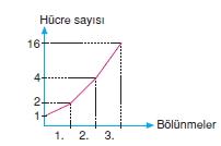 Hücrebölünmesivekalitimcözümlütest1011