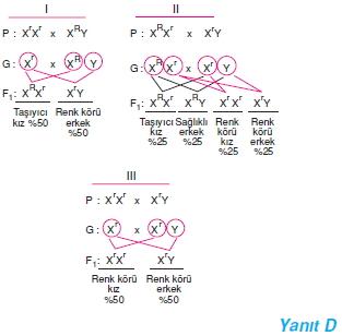 Hücrebölünmesivekalitimcözümler1002