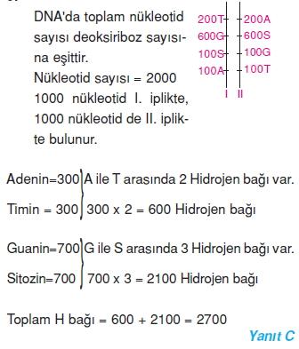 Hücrebölünmesivekalitimcözümler1005