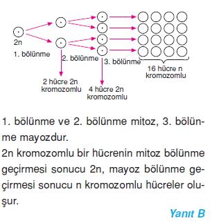 Hücrebölünmesivekalitimcözümler1007