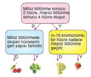 Hücrebölünmesivekalitimkonutesti6001