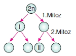 Hücrebölünmesivekalitimkonutesti6008
