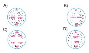 Hücrebölünmesivekalitimkonutesti7007