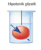 Hipotonik_cozelti