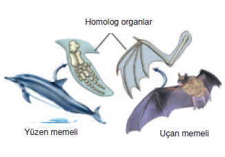 Homolog_Organ