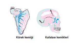 Kurek_kemigi