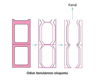 Odun_borularinin_olusumu
