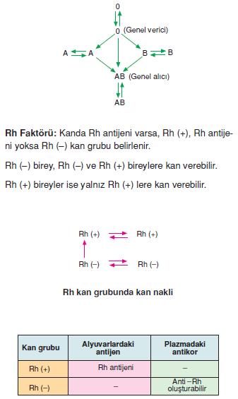 Rh_faktoru
