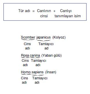 Tamlayici_isim