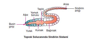 Toprak_Solucaninda_Sindirim_Sistemi