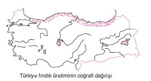 Turkiye_findik_uretiminin_cografi_dagilisi
