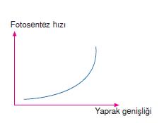 Yaprak_Yuzeyi
