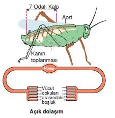 acik_dolasim