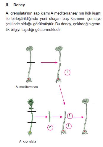 alg_deneyi