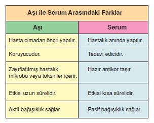 asi_ve_serum