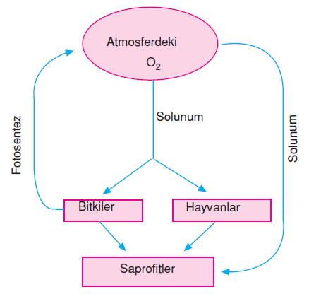atmosferdeki_oksijen_miktari