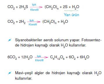 bakterilerde_fotosentez