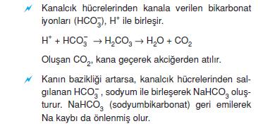 bikarbonat_iyonlari