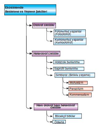 biyotik_faktorler