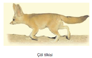col_tilkisi