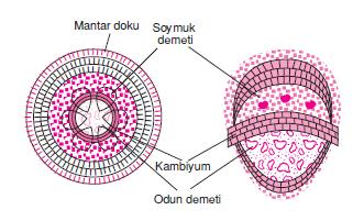 demetli_bitkiler