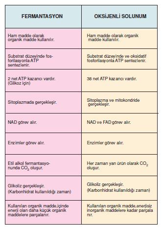 fermantasyon-_oksijenli_solunum