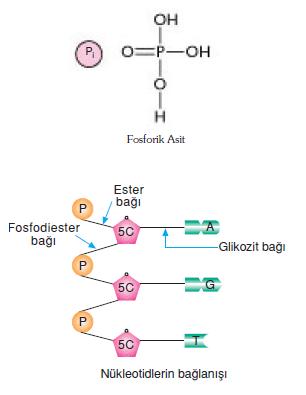 fosfat_grubu