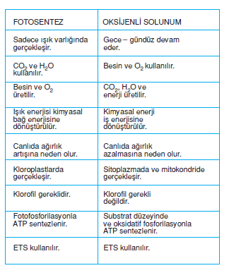 fotosentez_oksijenli_solunum_karsilastirmasi
