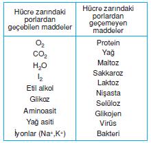 hucre_zarindan_madde_gecisi
