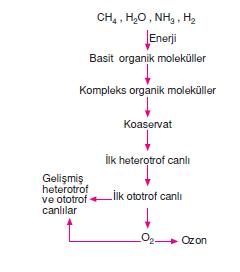 ilk_ototrof_canli