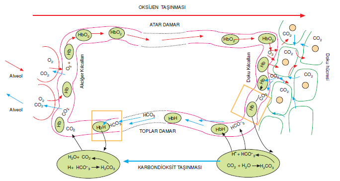 karbondioksit_tasinmasi_001