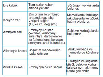 koriyon_zari