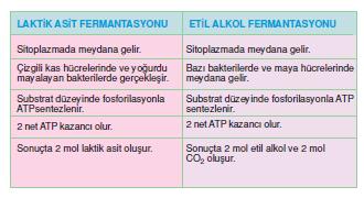 laktik_asit_fermantasyonu_