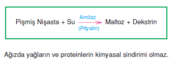 maltoz_olusumu