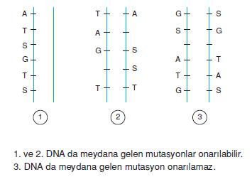 nokta_mutasyonu