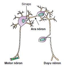 notron