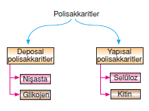 polisakkarit