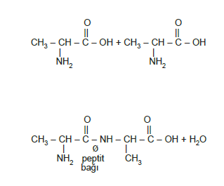 protein_olusumu