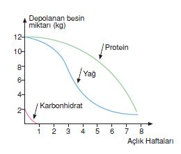 proteinlerin_gorevleri