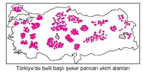seker_pancari_uretim_haritasi