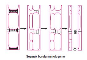 soymuk_borulari