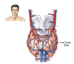 tiroid_bezi