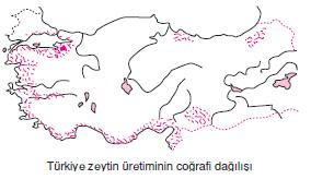 zeytinin_cografi_dagilisi