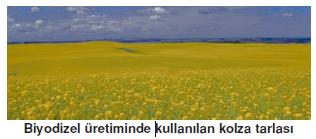 _Biyodizel_uretiminde_kullanilan_kolza_tarlasi