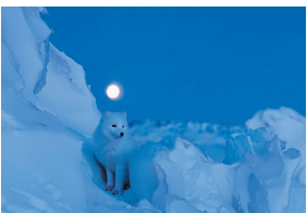Kutup_İklimi