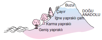 dogu_anadolu_yer_sekili
