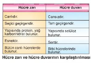 hücre zarı ve hücre duvarının karşılaştırılması