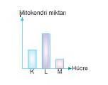 mitokondri miktarı.hücre