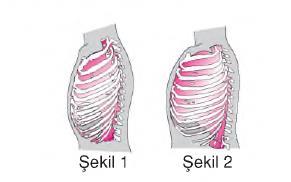 solunum sistemi.png