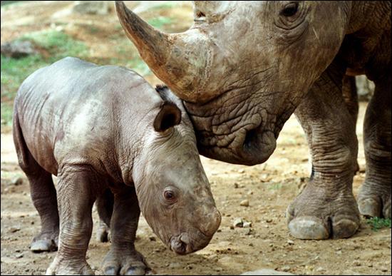 nesli-tukenmekte-olan-hayvanlar-5